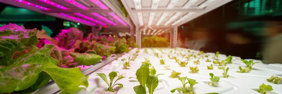 The effect of light spectrum on plant development - Part 2