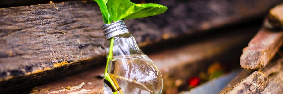 Grower's Tip: Need a Light?