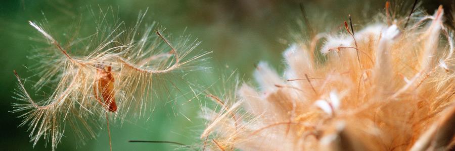 Plant growth regulators - Part 1