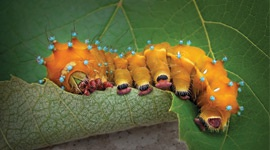 How to control pests and diseases? Biological vs. Chemical