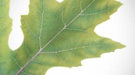 Sulphur deficiency guide