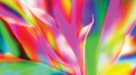 The influence of colours on plants